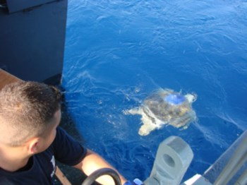 <p>A libertação da Calantha no oceano</p>