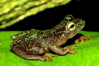 <p>Esta espécie não era vista desde 1967</p>