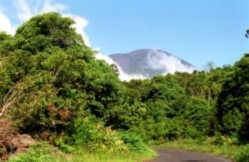 <p>A ilha do Pico está entre as ilhas com maior número de aves electrocutadas</p>