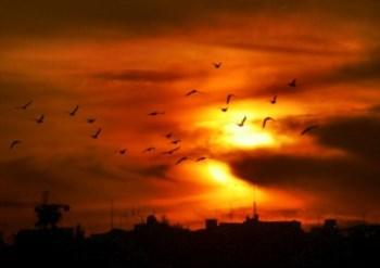 <p>Ainda há casos de mortalidade de aves nos EUA por resolver</p>