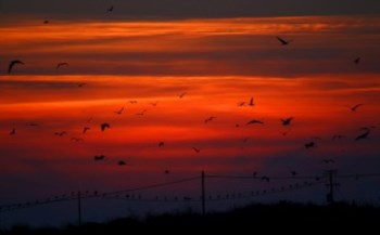 <p>A poluição ou as alterações climáticas podem agravar os factores de stress sobre a vida selvagem</p>