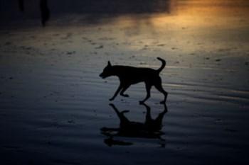 A vacina contra leishmaniose canina é lançada na terça-feira