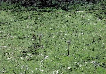 Em Maio foram derrubados 268 quilómetros quadrados de floresta da Amazónia