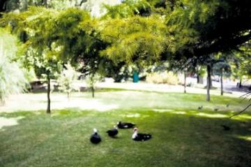 Em Lisboa há 65 árvores isoladas e 19 conjuntos de arvoredo classificados