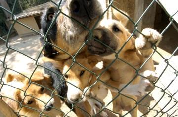 Na região algarvia os canis estão sobrelotados com animais abandonados