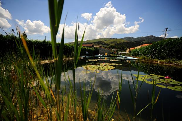A atrac o das piscinas biol gicas for Piscinas biologicas