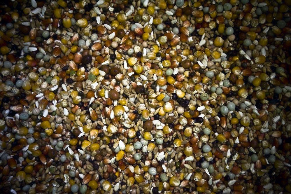 O universo multicolor das sementes