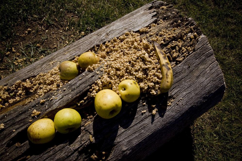 Os lórios adoram polpa de fruta