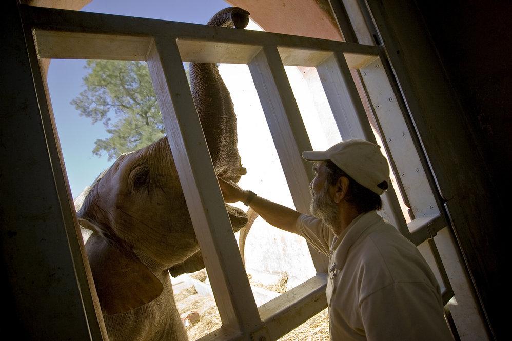 """""""Os elefantes levam-se bem""""§ dizem os tratadores"""