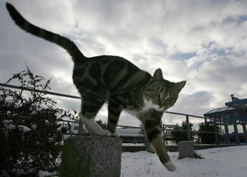 A gata Willow escapou-se da casa da família há cerca de cinco anos, durante umas obras de renovação (o animal da imagem não é a gata em questão)