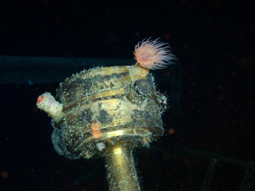 """O """"SS Gairsoppa"""" está submerso a 4700 metros de profundidade, mais 900 metros que o Titanic"""