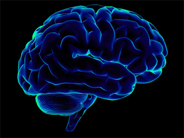 O estudo pode ter uma grande influência na forma como se olha para a inteligência