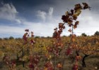 Por Vinhas de Portugal