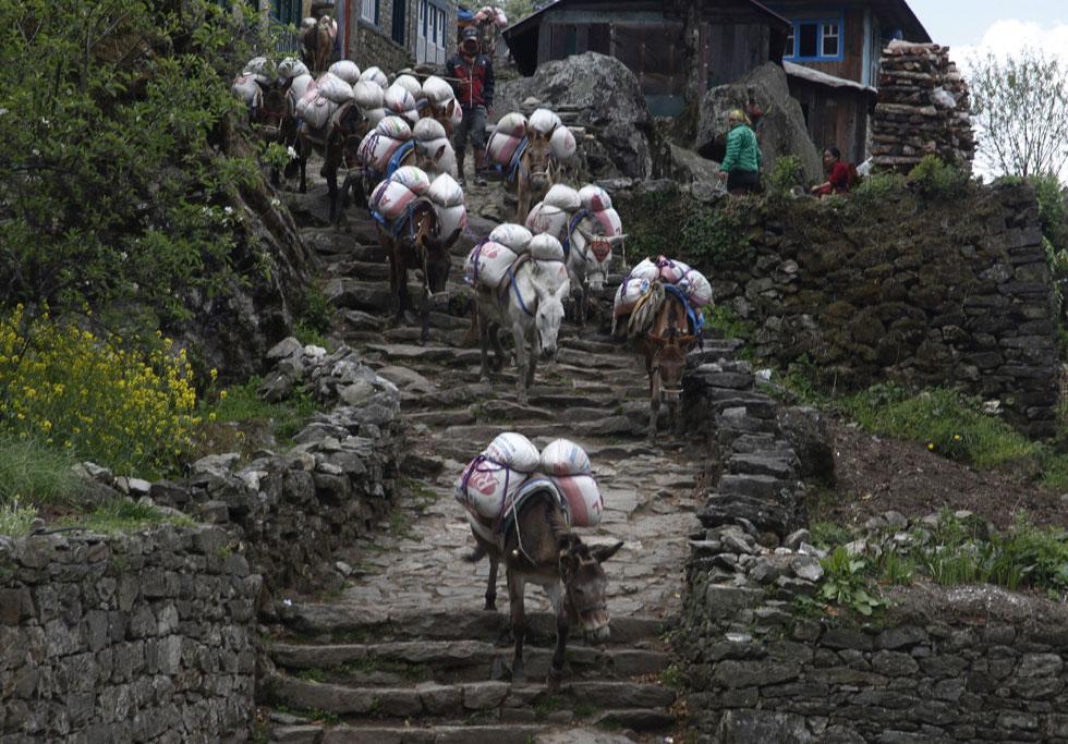 Burros transportam mercadorias perto de Phakding no leste do Nepal
