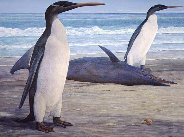 Dois pinguins Kairuku numa praia, passando por um golfinho Waipatia que deu à costa