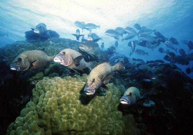 Grande Barreira de Coral na Australia