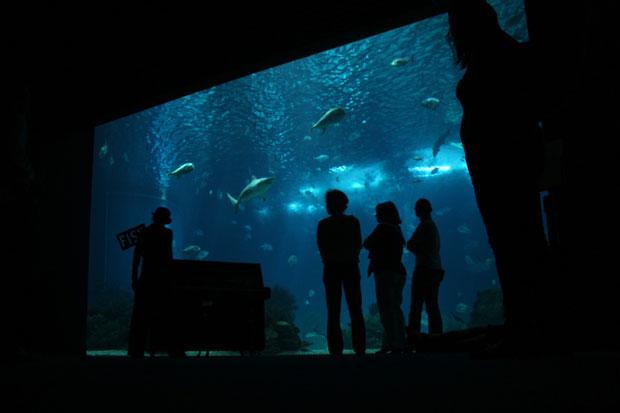 Lisboa. Maio 2011. Oceanário
