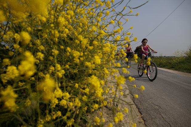 Ilha de Ré, as bicicletas reinam por aqui |
