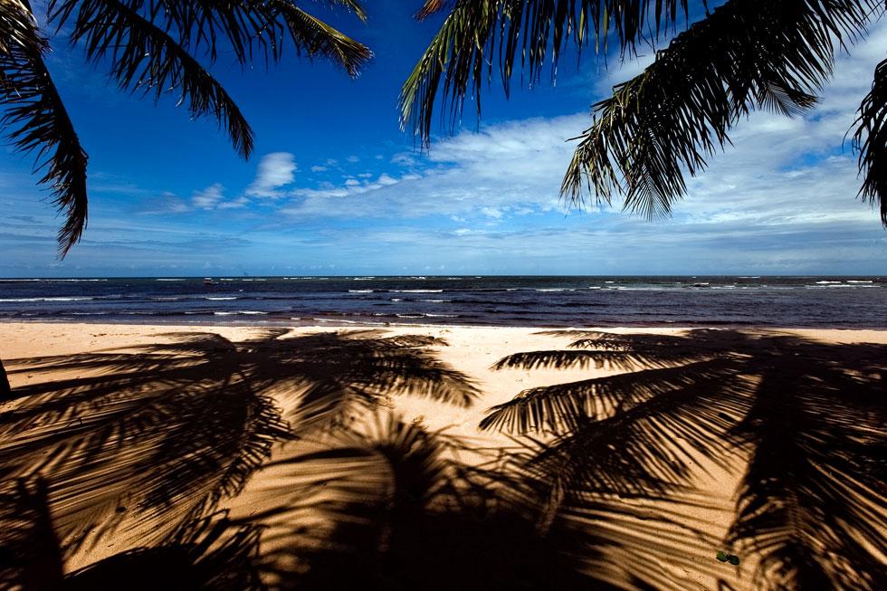 Na Fugas desta semana, Paulo Curado conta-nos tudo sobre a Praia do Forte, no litoral da Baía, Brasil. Um santuário ecológico que nasceu graças à persistência de um empresário e que se tornou o sonho de muitos turistas. Nesta fotogaleria, Daniel Rocha mostra-nos as forças desta área que tem as tartarugas como símbolo e atracção, até porque, aqui, são protegidas com vigor há mais de 30 anos graças ao Projecto Tamar. |
