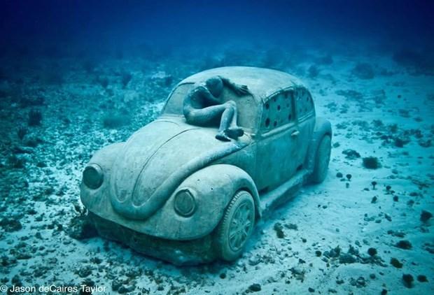 um carocha  fundo  mar