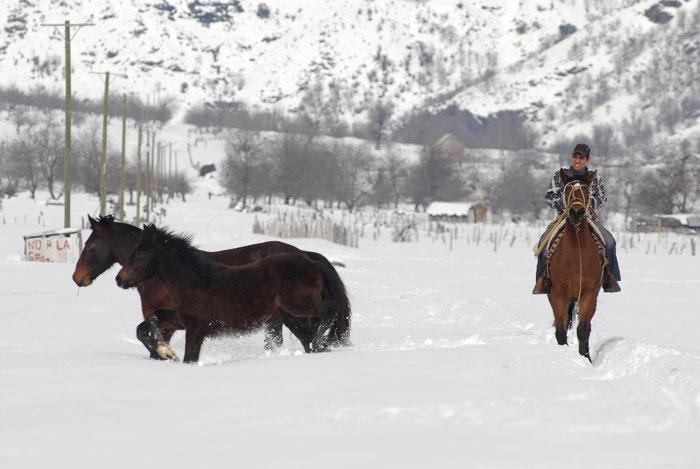 Chile | A cuidar dos cavalos em Butalelbum, em Bío-Bío, a 700km de Santiago. As zonas sul do Chile foram tomadas por grandes tempestades de neve, que isolaram milhares de pessoas. 2011.07.23 |