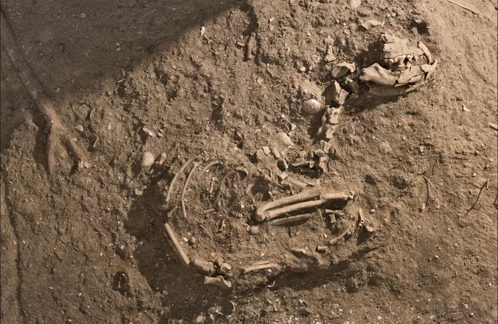 O cão foi sepultado nos amontoados de conchas deixados pelos caçadores-recolectores