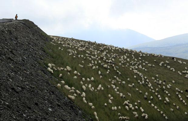 Roménia, 31.07.2011 | Um pastor vigia o seu rebanho perto do topo da Transalpina, a estrada mais elevada do país e que cruza as montanhas Parang no sul dos Cárpatos (até uma altitude de 2147m). A estrada está em obras de modernização.
