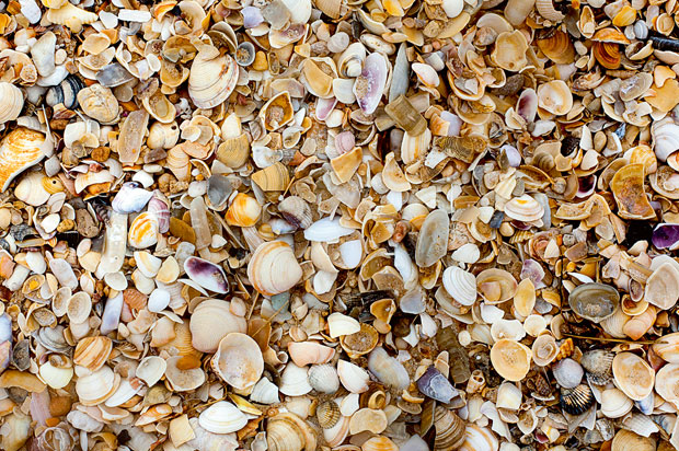 Quadro natural de conchas. Ilha de Tavira