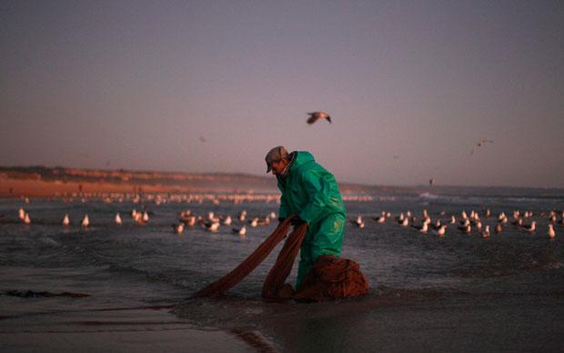 Caparica, 23.08.2011 | Um pescador trata da sua rede depois de pescar na Caparica.