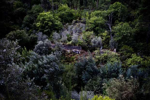 Seja de que tonalidade for, é o verde da floresta que garante grande parte da riqueza do concelho