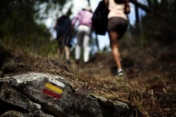 Nos passeios, há apenas o ruído crocante das nossas passadas sobre a caruma dos pinheiros