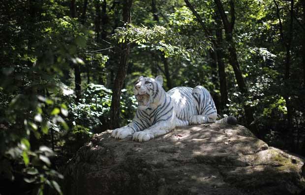 Uma estátua de tigre para decorar monte Kumgang.