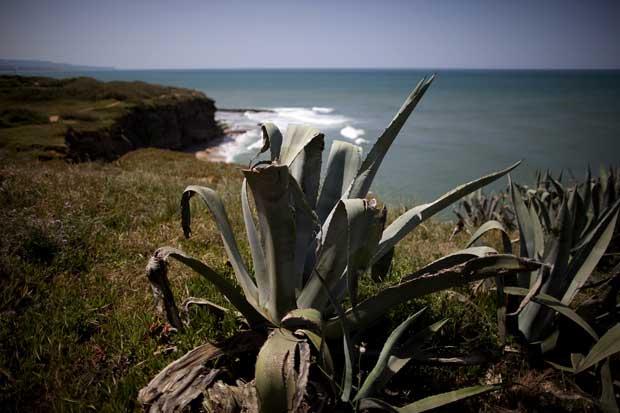 Caminho para a praia dos Coxos e Ribeira d' Ilhas.