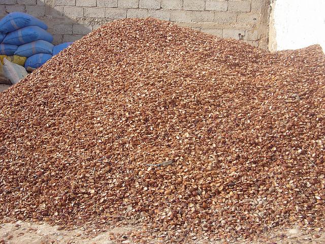 Depois de colhido, o fruto seca ao sol durante um mês