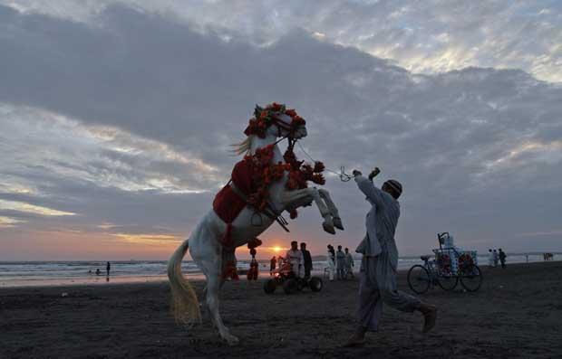 Paquistão, 3.11.2011 | Na praia de Clifton, em Carachi, um profissional do entretenimento de turistas: o cavalo é usado para pequenos shows para turistas e passeios na praia.