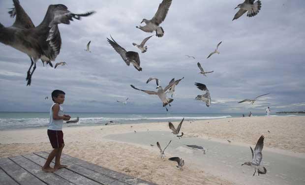 México, 27.10.2011 | Um rapaz alimenta gaivotas na Playa del Carmen.