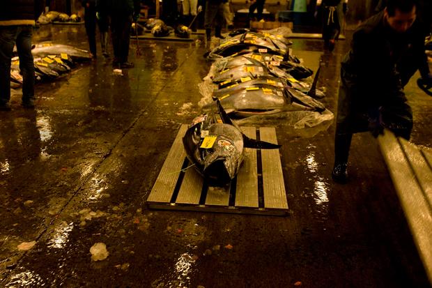 A zona de licitação do atum no mercado de Tsukiji – que começa às 5 da manhã e que está condicionada aos turistas.