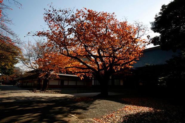 Viver o Outono em Tóquio, no exterior do Museu da Guerra.