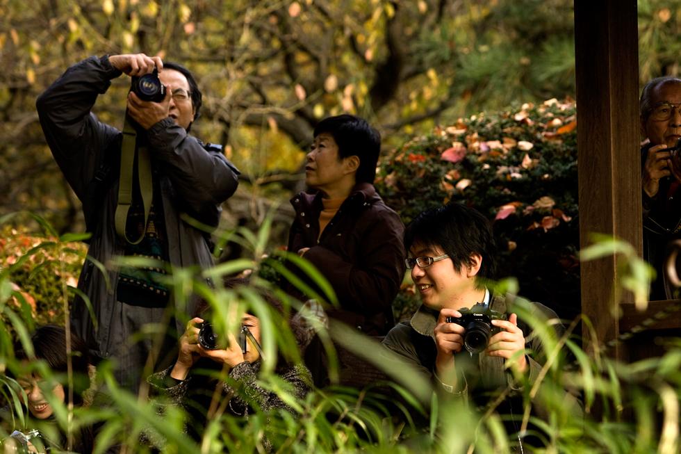 Aos domingos, os parques de Tóquio são invadidos por fotógrafos amadores devidamente apetrechados ou não fosse este o país da tecnologia. São completamente obcecados por fotografia de Natureza.