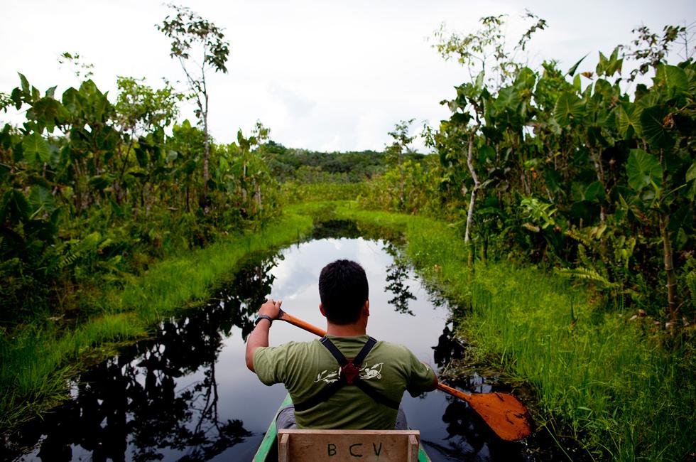 Melitón Yumbo, guia indígena da comunidade kichwa Añangu, na proa da canoa que avança por um canal de floresta inundada.