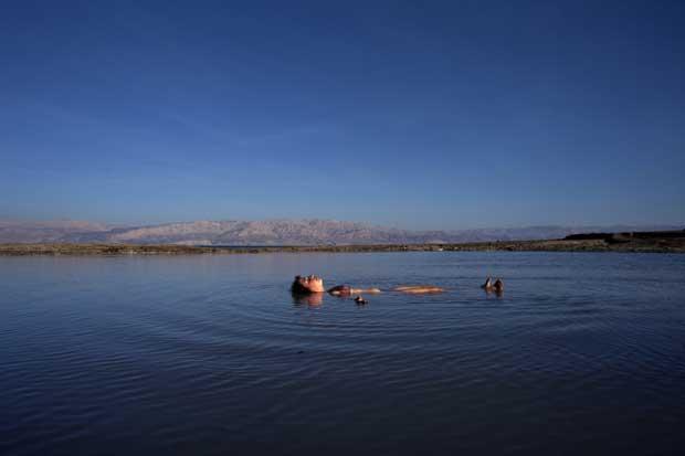 Israel/Cisjordânia, 09.09.2011 | A flutuar no Mar Morto, a norte do colonato judaico de Mitzpe Shalem na Cisjordânia.