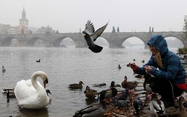 República Checa, 15.11.2011 | Uma rapariga alimenta as aves junto à Ponte Carlos de Praga. Em redor, um denso smog, nevoeiro e poluição, cobre a cidade.