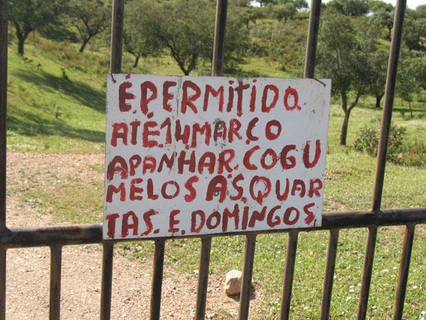 Alentejo, Estrada entre Pulo do Lobo e Serpa.
