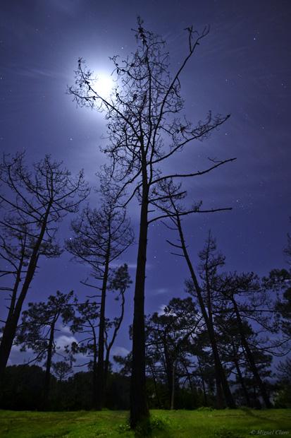 A Lua em fase quase cheia, iluminando de tal modo que quase parece de dia. Na imagem vertical obtida num pinhal na Fonte da Telha podemos ver algumas estrelas brilhantes por entre os ramos de um pinheiro, destacando a Sírius e a constelação de Orion, totalmente visível ao centro da imagem e por entre os ramos do pinheiro. Na imagem horizontal à direita, é possível observar uma formação de nuvens e à esquerda são visíveis as Plêiades. Na imagem em baixo é possível ver um Halo Lunar parcial, no topo da imagem, devido à refracção da luz em pequenos cristais de gelo presentes na atmosfera.