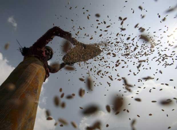Uma camponesa peneira cereais em Bhaktapur.