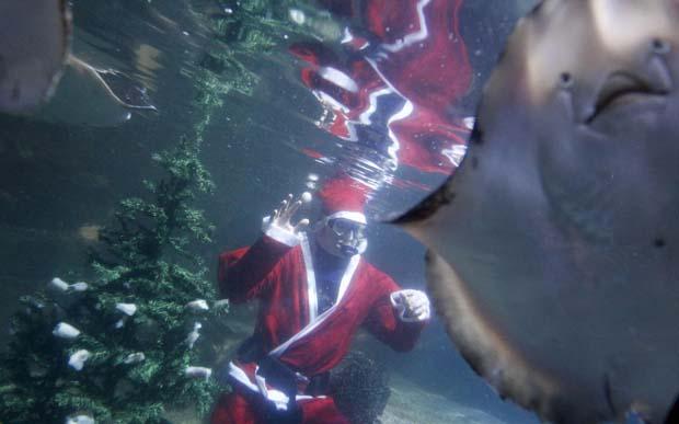 Alemanha. Pai Natal mergulhador no Sea Life de Berlim