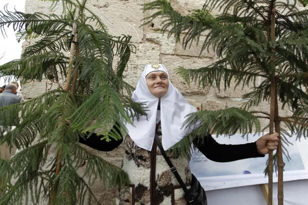 Israel. Uma freira com árvores distribuídas pela autarquia na Cidade Antiga de Jerusalém