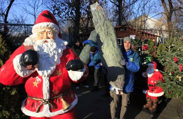 Roménia. A preparar as árvores de Natal num mercado de Bucareste
