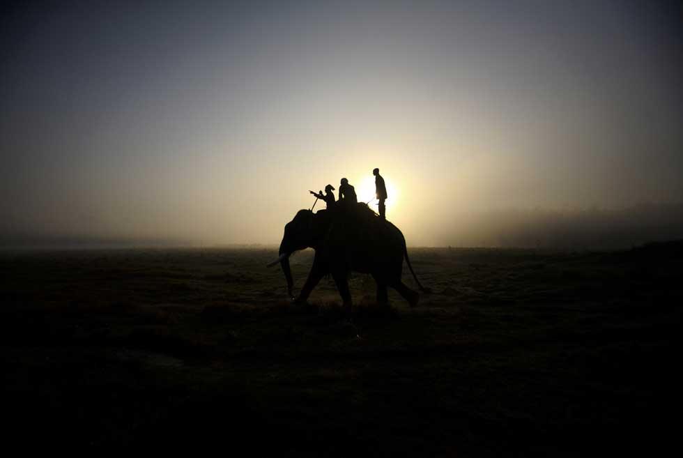 Nepal, 27.12.2011 | Ao pôr-do-sol, a conduzir o elefante após recolha de comida no parque nacional de Chitwan.