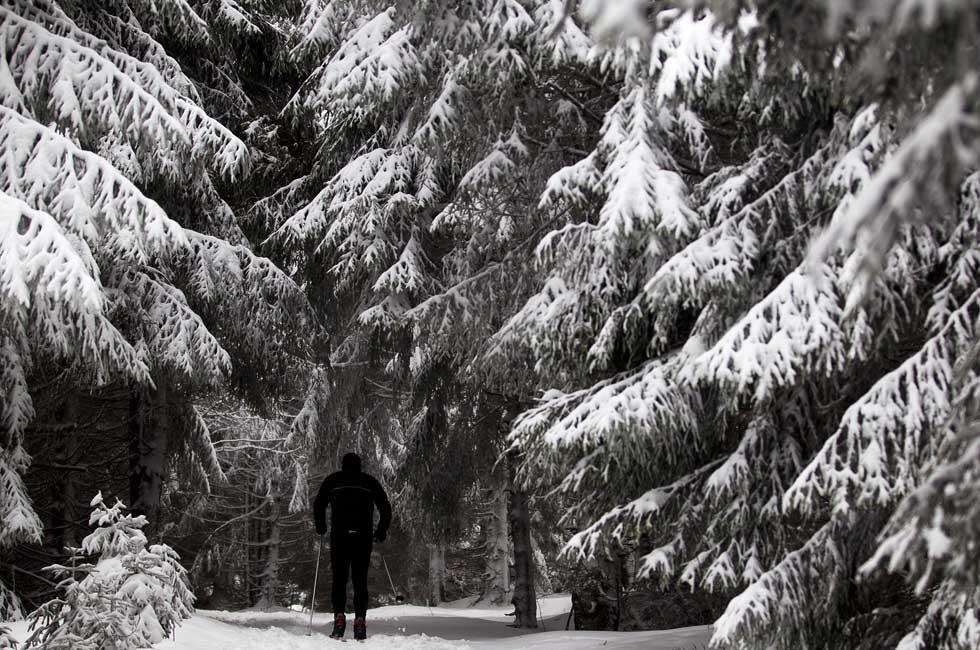 Alemanha, 30.12.2011 | Pela neve, após um intenso nevão, numa floresta perto de Oberhof